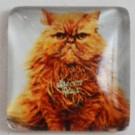 Klaaskamee Kass 15x15mm, 1 tk