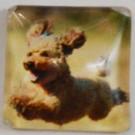 Klaaskamee Koer 15x15mm, 1 tk