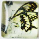 Klaaskamee Liblikas 15x15mm, 1 tk